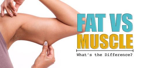 Fat vs. Muscle : What's the Difference?